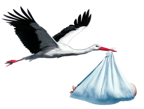 storch_baby_junge
